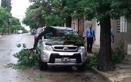 24/01/2019: Un árbol cayó sobre una camioneta en plena de la tormenta de este miércoles