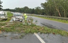 11/02/2019: La caída de un eucaliptus perjudica el tránsito en la Autovía Artigas