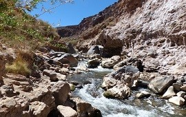 24/02/2020: Valles Calchaquíes: alertan sobre la posible extinción de especies por la introducción de truchas