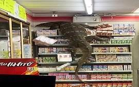 07/04/2021: Tailandia: pánico en un supermercado por un lagarto de 2 metros