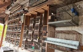 08/04/2021: Mataderos: Se rescataron 80 animales de un criadero ilegal