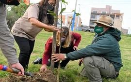 23/04/2021: Plantaron árboles nativos en una plazoleta de la ciudad por el Día de la Tierra