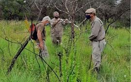 24/04/2021: Investigadores de la UTN estudian los efectos de las acacias en la región de Salto Grande