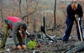 20/05/2017: Voluntarios plantaron 130 mil árboles para reforestar un bosque quemado
