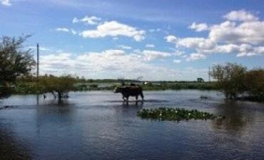 Vence el plazo para adherirse a la emergencia agropecuaria