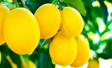 27/06/2017: Argentina retomó la exportación de limones a Brasil suspendida desde 2009