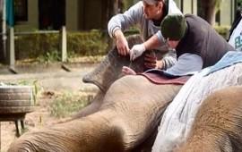 05/06/2018: Murió la elefanta Pelusa, un emblema del zoológico de La Plata
