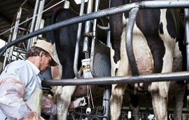 07/06/2018: Se viene el lecherazo: tamberos regalarían 20 mil litros de leche ante la crisis del sector