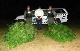 07/06/2019: Los detuvieron al descubrirles plantas de marihuana de más de 2 metros y droga fraccionada