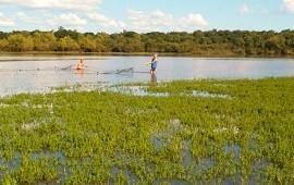 14/06/2019: Dorados, sábalos y bogas del río Uruguay tenían restos de medicamentos, según un estudio