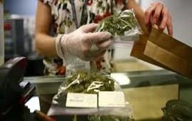 18/07/2017: El primer lote de cannabis medicinal santafesina saldrá de Rosario