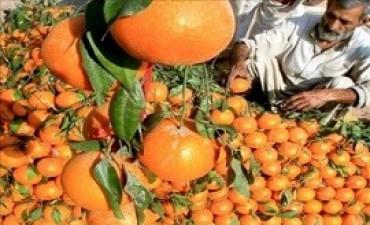 05/07/2017: Por primera vez en ocho años se exportaron naranjas a Brasil