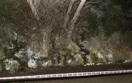 07/07/2018: Las pericias envuelven de más misterio el caso de las jóvenes halladas en un bosque atadas a un árbol
