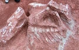10/07/2018: Descubren restos de un dinosaurio gigante de más de 200 millones de años en San Juan