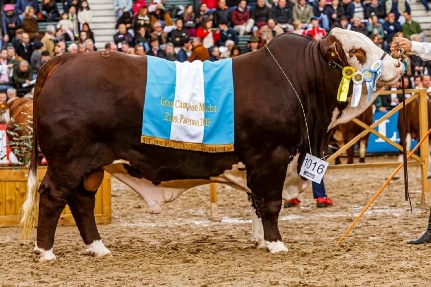 30/07/2019: Tras una violenta jornada en la Rural, Entre Ríos aportó los campeones de la raza Braford con un doblete