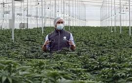 26/07/2021: Comienzan en Argentina estudios sobre el uso de cannabis en dolores asociados al cáncer