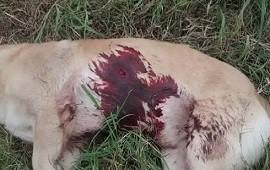 05/09/2019: La foto del asesinato de un perro en Entre Ríos generó revuelo en Colombia