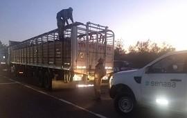 19/09/2019: Abigeato sigue detectando garrapatas en bovinos que ingresan desde el norte