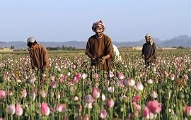 29/09/2021: Con los talibanes, el precio del opio se triplicó en Afganistán