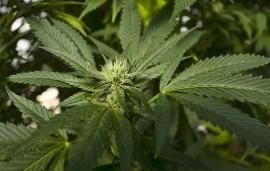 03/10/2019: Expo Cannabis en La Rural: un encuentro de 3 días con todo sobre la cultura de la marihuana
