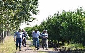 01/10/2020: Monitorearon quintas citrícolas de los departamentos Concordia y Federación por el HLB