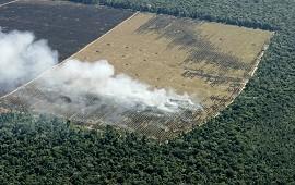 12/10/2020: La deforestación en la Amazonía brasileña registró una leve baja en lo que va del año, pero los incendios aumentaron un 14 por ciento