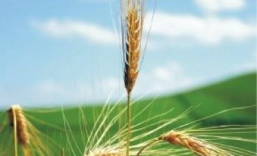 Creció un 65 por ciento la superficie cultivada con trigo en Entre Ríos
