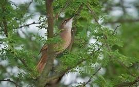 05/11/2019: Descubren dos nuevas especies que se suman el inventario de aves de Concordia