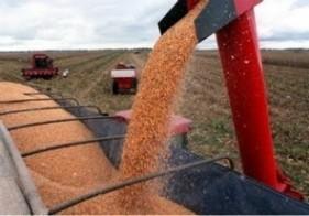 Detectan millonaria evasión en el mercado cerealero