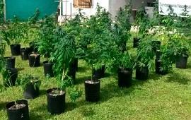 02/12/2019: Tenían 60 plantas de marihuanas esparcidas por toda la casa