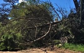 17/12/2019: ste lunes por la tarde, en la zona rural de Colonia Yeruá (Departamento Concordia), un hombre de 56 años perdió la vida luego de que se le cayera un pino que estaba cortando.