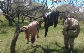 22/12/2019: Tres personas detenidas tras carnear siete corderos robados